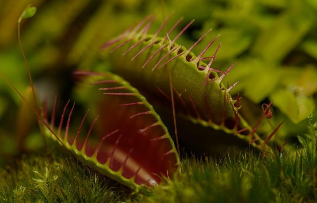 Estafas-planta carnívora