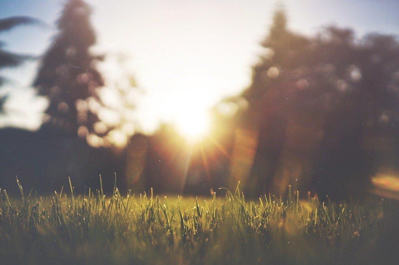 hierba - ventajas de vivir en el campo