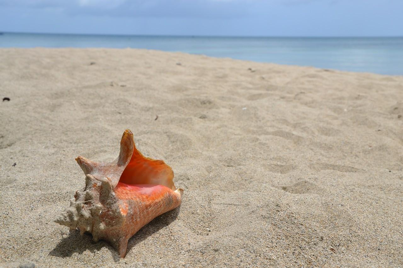 Concha en playa de alquiler vacacional