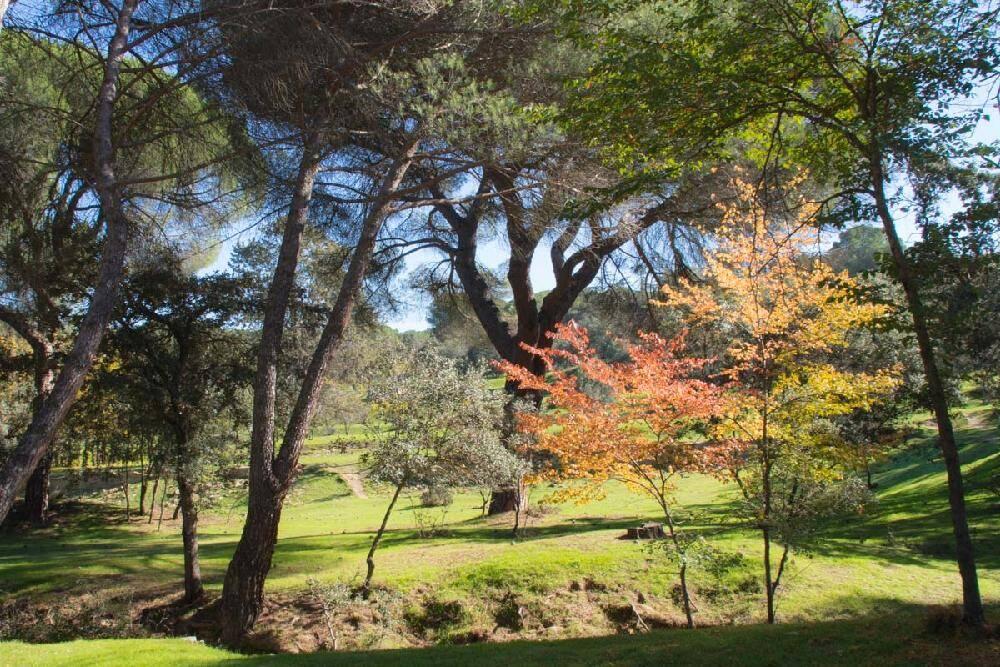 Parque forestal Monte del Pinar